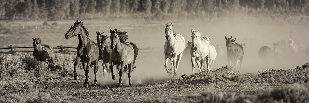 Feisty Horses Returning to their corrals for another day on the trail.