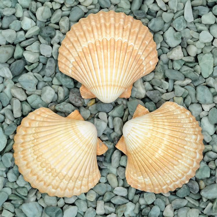 sea, shells, green, stone, pebbles, arrangement, decorating, decor, design, art, close up
