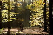 Bij Woudenberg lopen een man en vrouw door het bos op een mooie herfstdag.<br /> <br /> Near Woudenberg a man and woman wander in the woords on a nice autumn day.