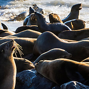 Seals in Cape Cross Seal Reserve