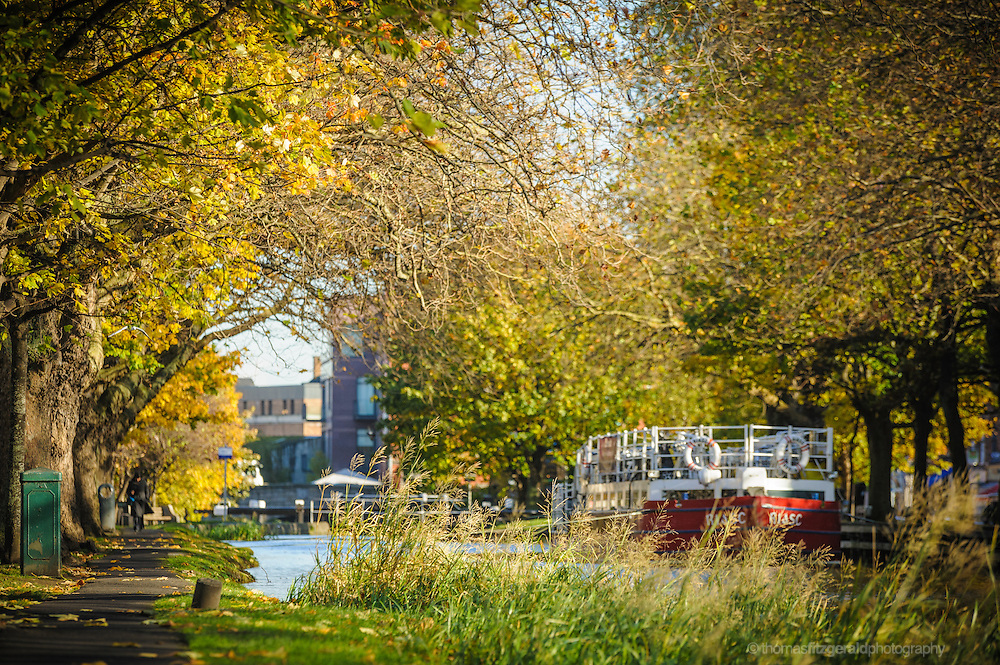 Autumn scene in Dublin's Grand canal with golden colours and fallen leaves and the barge on the water