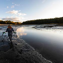 A biologist studies clam populations in Brunswick, Maine.