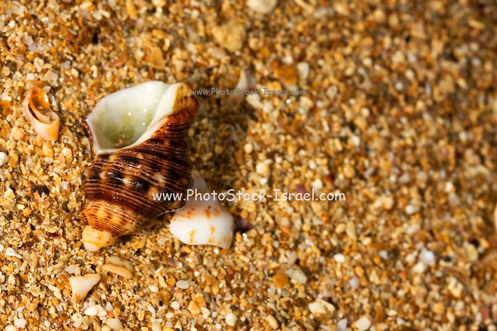 elaborate exoskeleton shell on fragments of shells on the shore