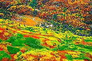 Fall colors, Wrangell-St. Elias National Park, Alaska, USA
