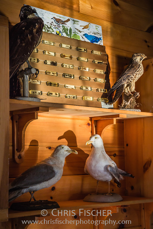 Nature exhibit in the Queen Mary building at the Hog Island Audubon Camp in Maine. The camp is operated by the Seabird Restoration Program (Project Puffin) of the National Audubon Society.