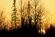 Sunset, Bare Trees, Winter, Northern Minnesota