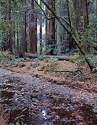 Redwood Creek, Muir Woods,  Muir Woods National Monument, California