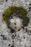 Imagined troll, Stokksnes, Iceland
