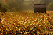 Landscape with old barn in autumn field