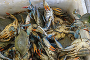 Fresh crabs on ice at a stall at the Athens food market