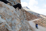 A goat resting on a cliff along the road during the scenic drive to  Balos Beach on the Gramvousa Peninsula, Crete, Greece