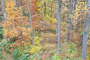 Deciduous forest interior; autumn; PA,Philadelphia;  Fairmount Park