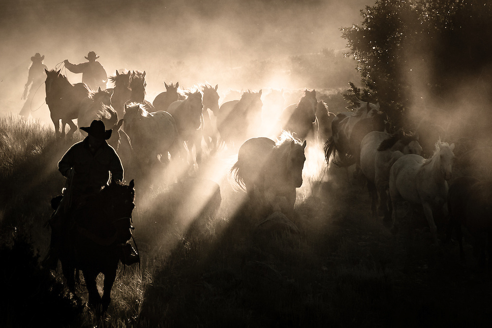 Early Morning Light, CM Ranch, Wyoming