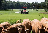 HENGELO (GLD) - greenkeeper aan het wek. maaien op golfbaan 't Zelle . COPYRIGHT KOEN SUYK