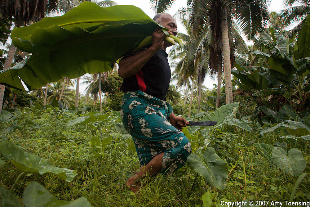 HA'ANO, TONGA - APRIL 14: Lautala Taufa carries freshly cut banana leaves through the bush on April 14, 2007 on the island of Ha'ano in the island chain of Ha'apai, Tonga where he tends to his 7 acre plot twice a week and harvests food for his family. Tonga is one of the last surviving monarchies in the Pacific islands, however there has been a recent push towards democratic reform, challenging the people of Tonga to maintain their cultural heritage while conforming to modern day capitalism. (Photo by Amy Toensing/ Reportage by Getty Images) _________________________________<br /> <br /> For stock or print inquires, please email us at studio@moyer-toensing.com.