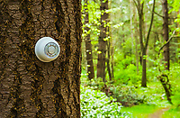 A thermostat on the side of a tree in the forest. Global warming concept / climate change. Turn down the heat.