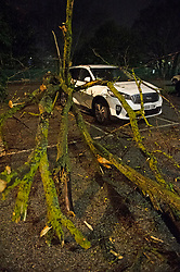 ©Licensed to London News Pictures 14/01/2020<br /> Dartford, UK. Storm Brendan has blown down a large tree onto a white Kia Sorento car in Dartford train station car Park in Dartford, Kent. The tree has caused significant damage to the vehicle. Photo credit: Grant Falvey/LNP