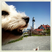 DAY THREE of SEVEN: A 12x12 archival print of &quot;Chloe and Portland Head Light&quot; will be available for purchase until July 17th. This print will be in an edition of 7 for $49.49.<br />  <br /> Chloe, a West Highland Terrier, near the Portland Head Light in Cape Elizabeth, Maine.