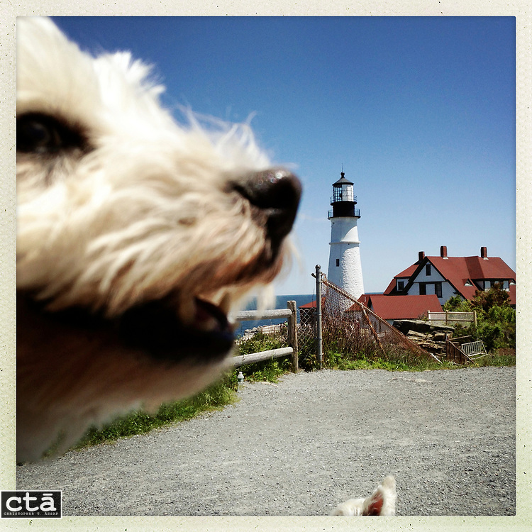 DAY THREE of SEVEN: A 12x12 archival print of &quot;Chloe and Portland Head Light&quot; will be available for purchase until July 17th. This print will be in an edition of 7 for $49.49.<br />