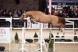 064, Qwibus van D'Abelendreef<br /> Hengstenkeuring BWP - Lier 2019<br /> © Hippo Foto - Dirk Caremans<br /> 18/01/2019