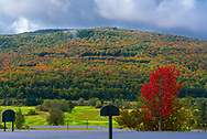 Trees in the mountains are turning color in autumn