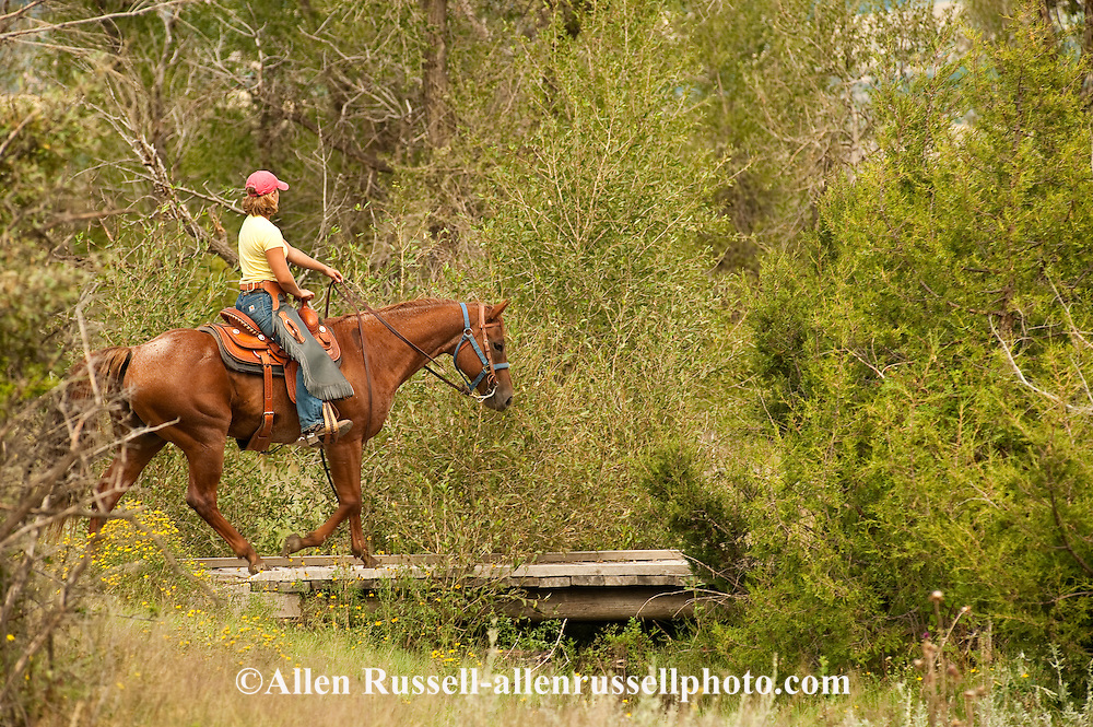 Trail Riding, teenager, girl, Quarter Horse, Montana