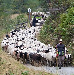 17.09.2010, Dorfertal, Kals, AUT, Abtrieb der Schafe von den Bergwiesen, über die Sommermonate werde in die Bergregion oberhalb des Kalser Dorfertales 1000ende Schafe zu den Weideplätzen aufgetrieben, mitte Sebtember werden die Tiere dann wieder zusammengetrieben und in der sog. Schafschoade auf die einzelnen Bauern zurückverteilt. EXPA Pictures © 2010, PhotoCredit: EXPA/ J. Groder