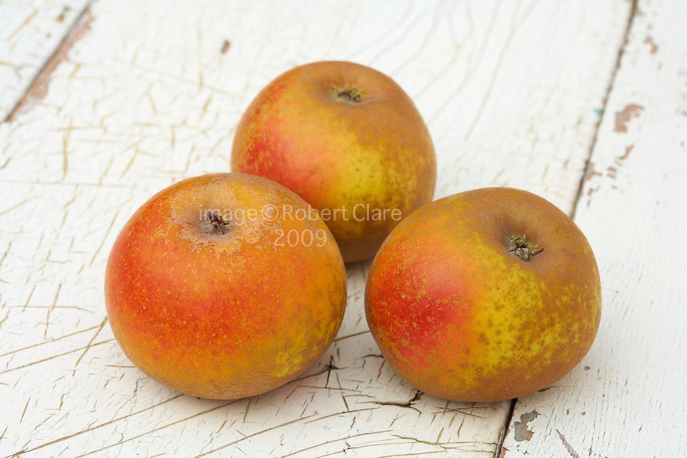 Egremont Russet Desert Apple Malus Domestica