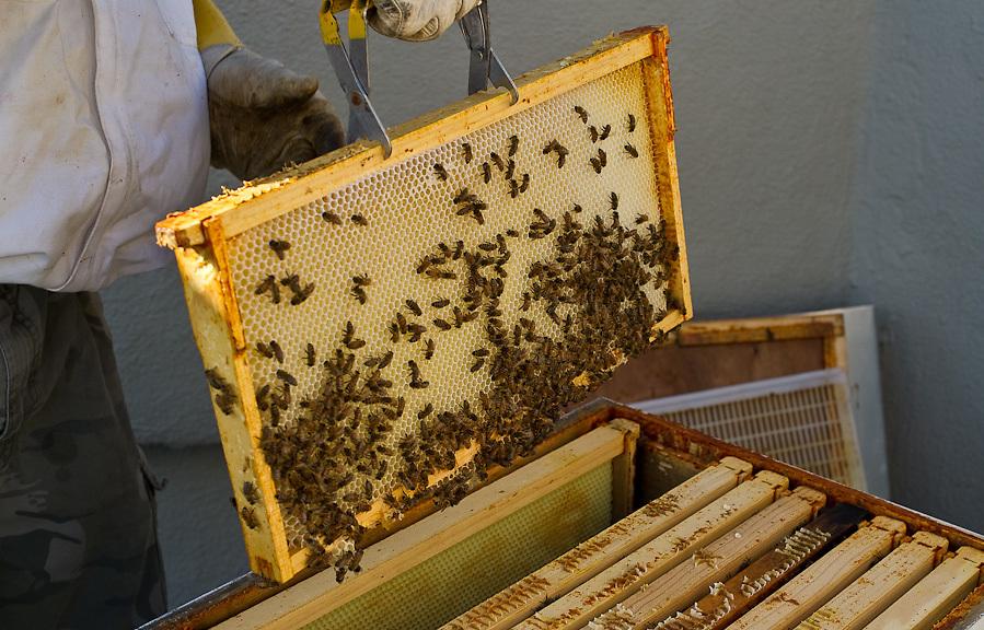 Chase Emmons, Bee Keeping, Brooklyn Grange