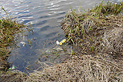 Henley on Thames. United Kingdom.  General View, rubbish collected on the bank side. the River Thames at the Oxfordshire. Henley Reach.   <br /> <br /> Saturday  28/01/2017<br /> <br /> © Peter SPURRIER<br /> <br /> LEICA CAMERA AG  LEICA Q (Typ 116)  f3.2  1/640sec  28mm  7.5MB