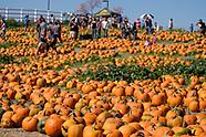 2017 Pumpkin Festival in in Cal Poly Pomona