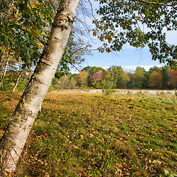 Fall foliage and hay field on the Benjamin Farm in Scarborough, Maine.