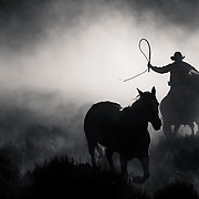 Wrangler with Quirt driving a horse.