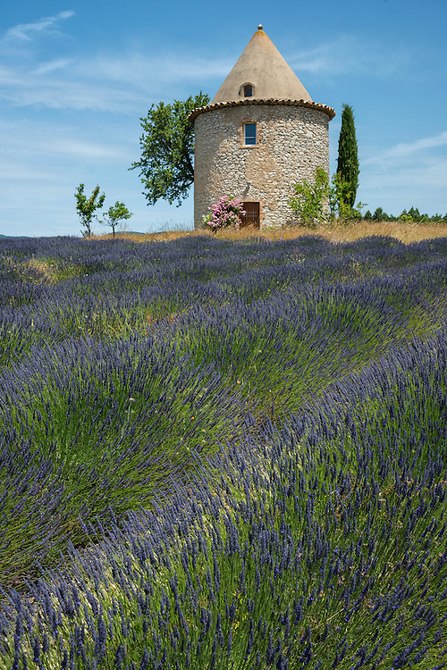 Europe, France, Provence, tower and lavender field