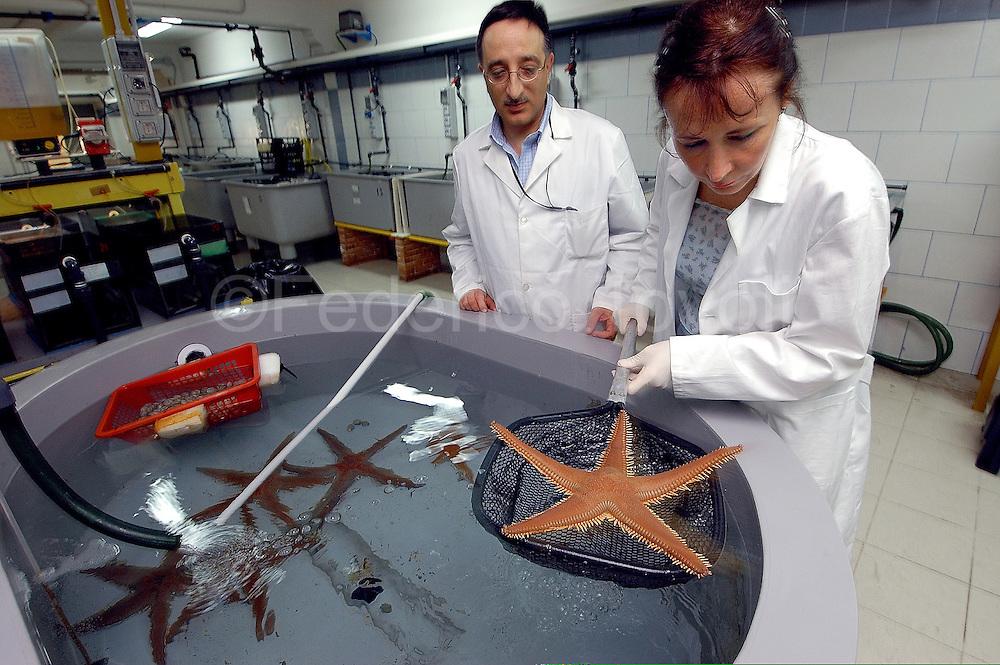 Dr. Luigia Santella takes a female starfish oocytes to be used for in vitro fertilization.