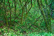 Lush forest above Pfeiffer Beach, Big Sur, California