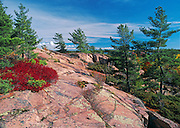 White pines (Pinus strobi) on pink granite. Chikanishing Trail along Georgian Bay on Lake Huron<br /> Killarney Provincial Park<br /> Ontario<br /> Canada