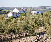 Olive trees whitewashed farmhouse in countryside, near Alhama de Granada, Spain
