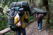 Porters carry their heavy loads up the trails of Mount Kilimanjaro in Tanzania. The porters work for very low wages, less than five dollars a day, and depend upon tips to make their work worthwhile.
