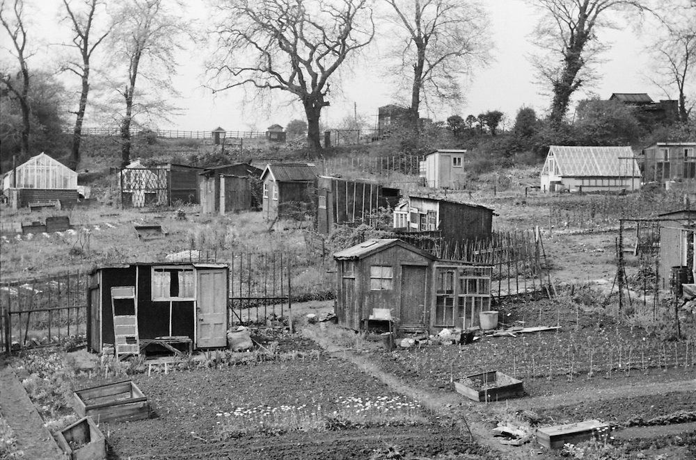 The Potteries, Staffordshire, Allotments, 1936