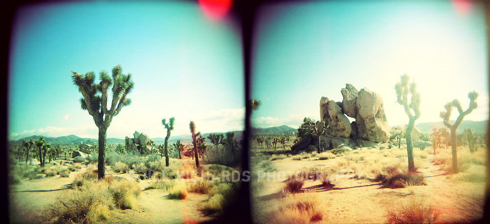 Joshua Tree National Park in California straddles two deserts: Mojave Desert and Colorado Desert. The park got its name from the unique Joshua Trees (Yucca brevifolia) that fill the more than 1,200 square miles. These photographs were shot on film using a Holga, a small plastic camera..