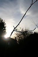 Tree branch with empty bird feeder silhouetted against winter sunset in Ireland