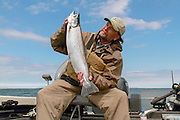 Atlantic salmon caught in Chequamegon Bay of western Lake Superior, Wisconsin, U.S.