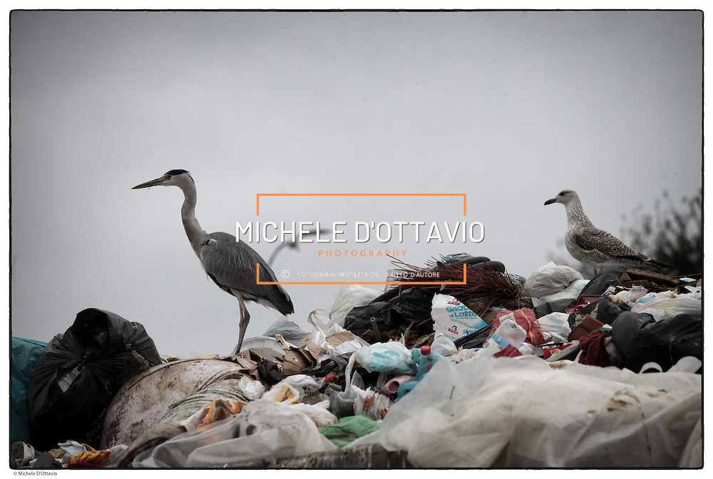 Amiat Amiat  (acronimo di Azienda Multiservizi Igiene Ambientale Torino) è una società per azioni che eroga i servizi d'igiene del suolo, di raccolta e smaltimento rifiuti per la città di Torino