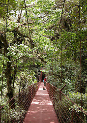 Monteverde, Guanacaste:  Man on hanging bridge in heart of the Monteverde Cloud Forest. Straddling Costa Rica's continental divide 110 miles west of San Jose, this wild, unspoiled place is a virgin forest jungle brimming with incredible numbers of birds, butterflies, and mammals as well as more than 2,500 plant species. No more than 100 visitors are allowed within the grounds at any one time to preserve this unique and fragile ecology. A web of trails allows exploration on your own or with a highly trained guide (latter is recommended).