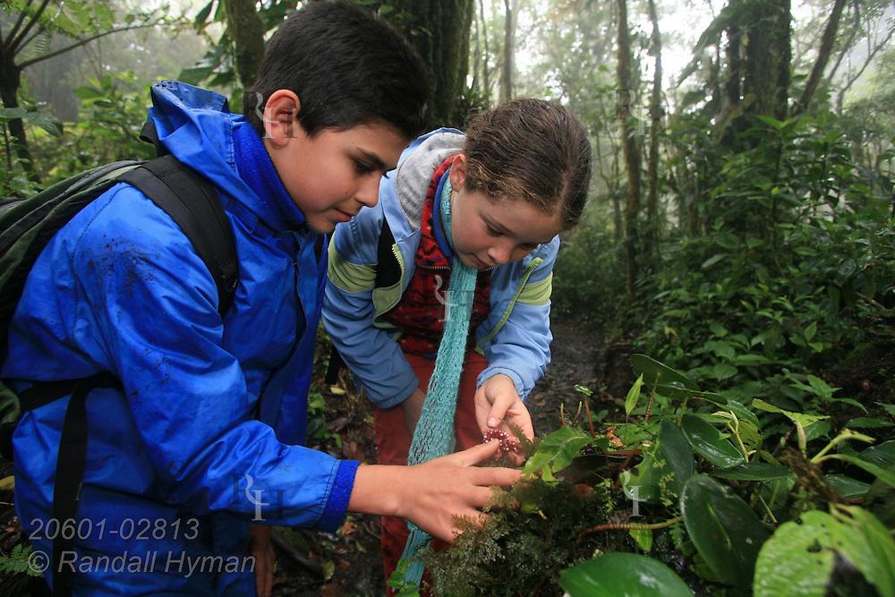 Cloud Forest School sixth graders Douglas Rodriguez Cruz and Jocelyn Mena Mora examine flower in rainforest of Santa Elena National Park, Costa Rica.