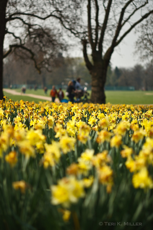 Spring flowers bloom in Hyde Park, London, England.