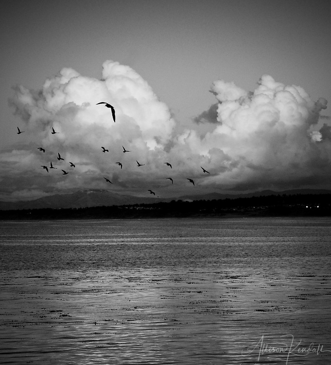 Winter storms and birds pass over a calm Monterey Bay
