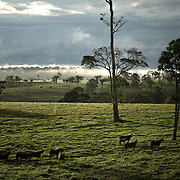 nuage foret castanheira do Para