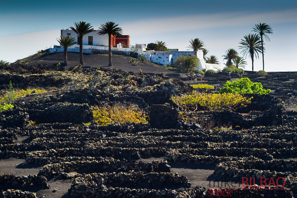 Vines growing in volcanic lapilli. La Geria region. Lanzarote, Canary Islands, Atlantic Ocean, Spain.